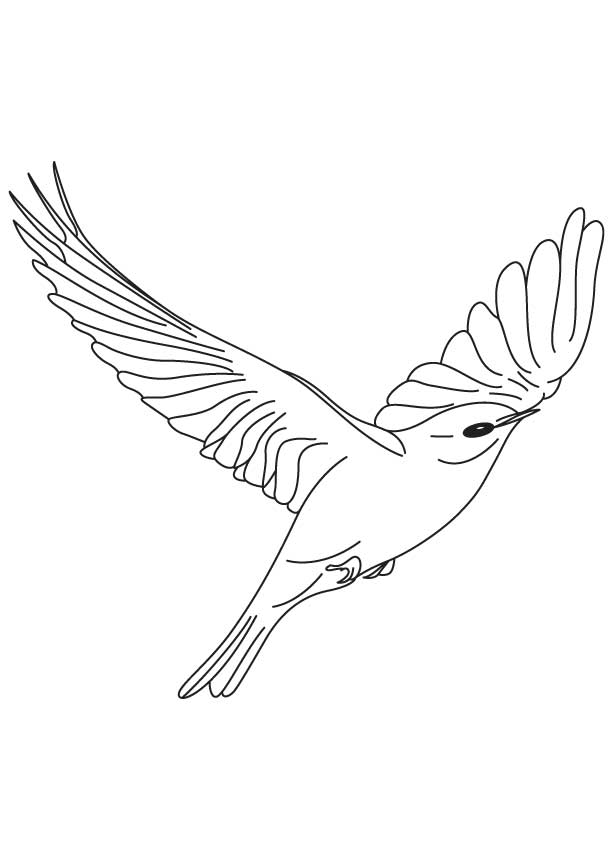 Drawings of birds flying related keywords amp suggestions