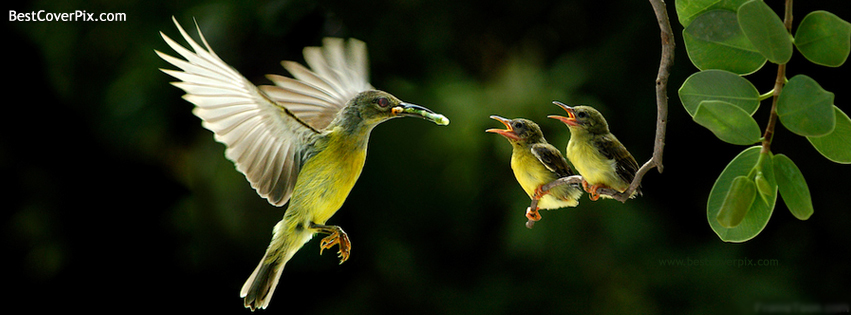 Cute Animated Dolls Wallpapers Bird Feeding Best Nature Fb Cover Photo