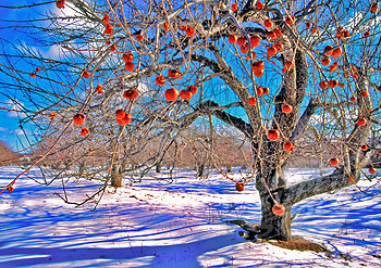 Really Cool 3d Wallpapers Winter Season Best Download 2