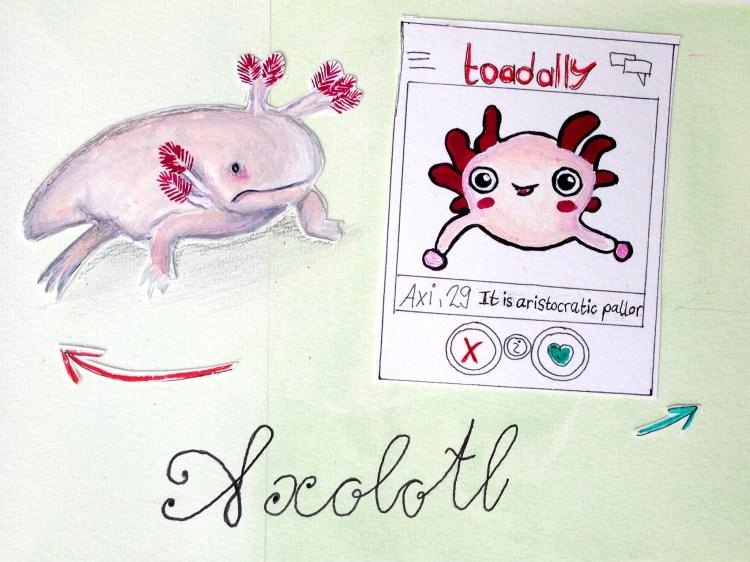 Die hässlichsten Tiere - Platz 8 Axolotl
