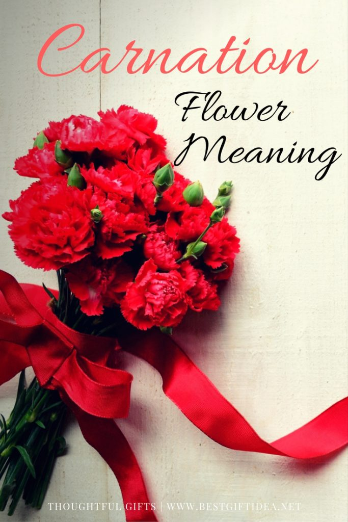 Carnation Flower Gift Best Gift Idea Carnation Flower Meaning | Flower Of The