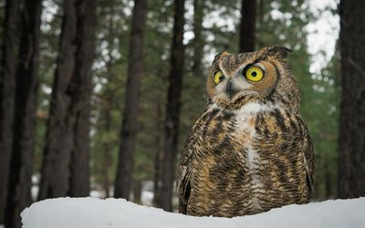 Fantasy Forest 3d Desktop Wallpaper Download Wallpapers Owl Winter Forest Snow Great