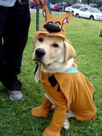 Top 10 Best Halloween Costumes for Dogs - 2018