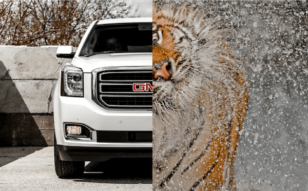 2015 GMC Yukon. Picture courtesy of Caranddriver.com, Tiger picture courtesy of National Geographic