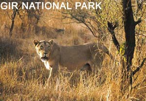 Gir-National-Park301