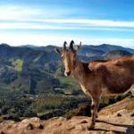 Periyar National Park