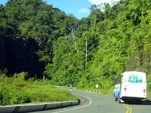 Vegetação exuberante acompanha a Interoceânica amazônica foto : Z. Santos