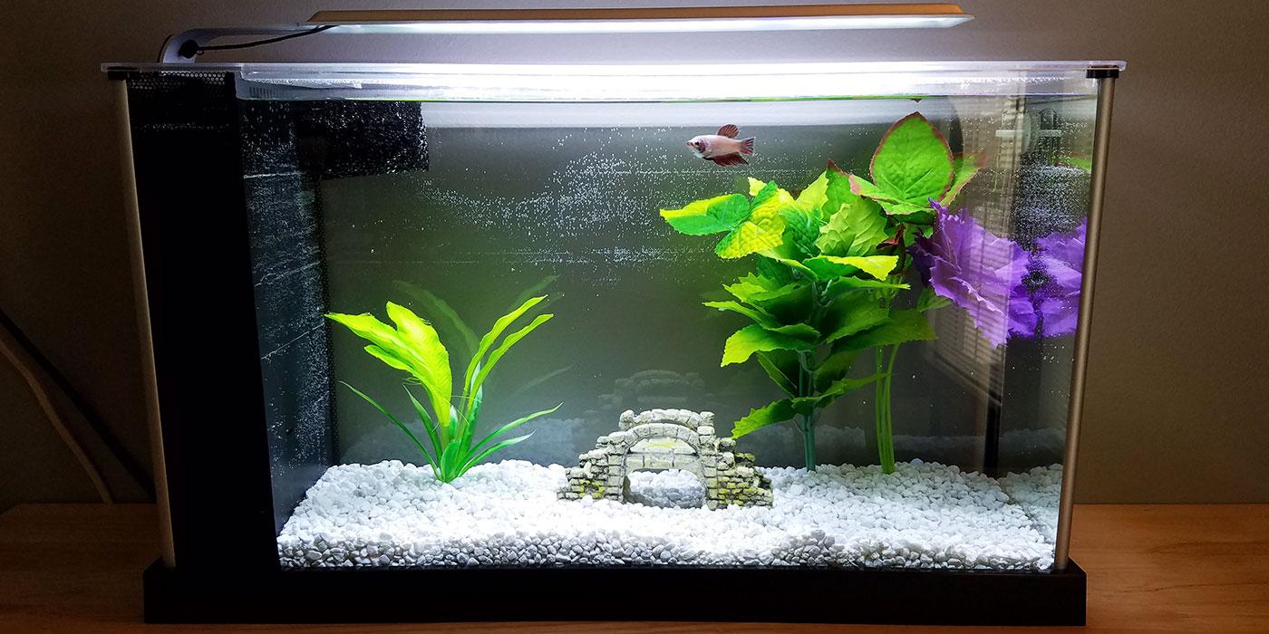 Do Betta Fish Need A Filter Bettafishorg
