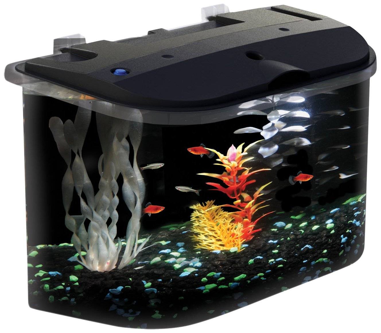 Fullsize Of Betta Fish Water Temp