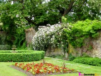 Gardening/ Landscaping on Pinterest