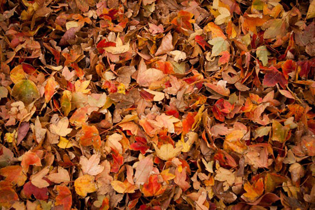 Falling Down Flowers Wallpaper 6 Useful Ways To Use Dried Up Fall Leaves Better Housekeeper