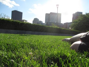 A Nap in the Grass
