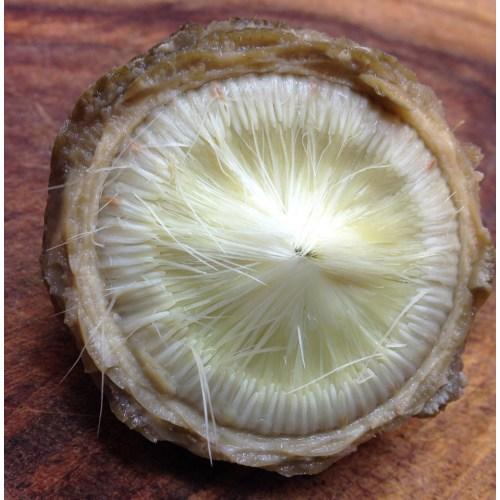 Medium Crop Of Frozen Artichoke Hearts
