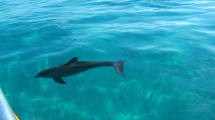 Watching dolphins frolic on our snorkel tour.