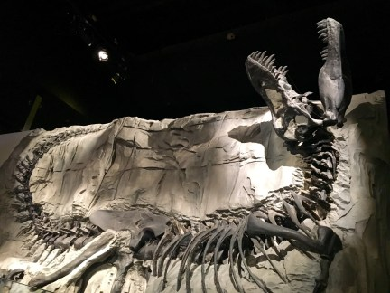 Black Beauty, Royal Tyrrell Museum, Drumheller