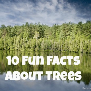 Fun facts about trees