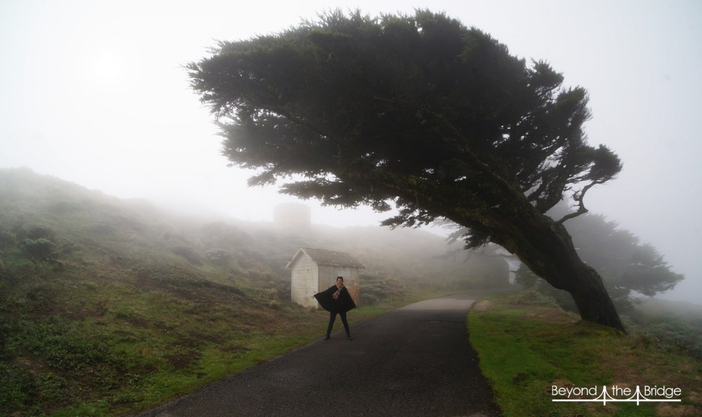 Promenade dans le brouillard à Point Reyes National Park (CA)