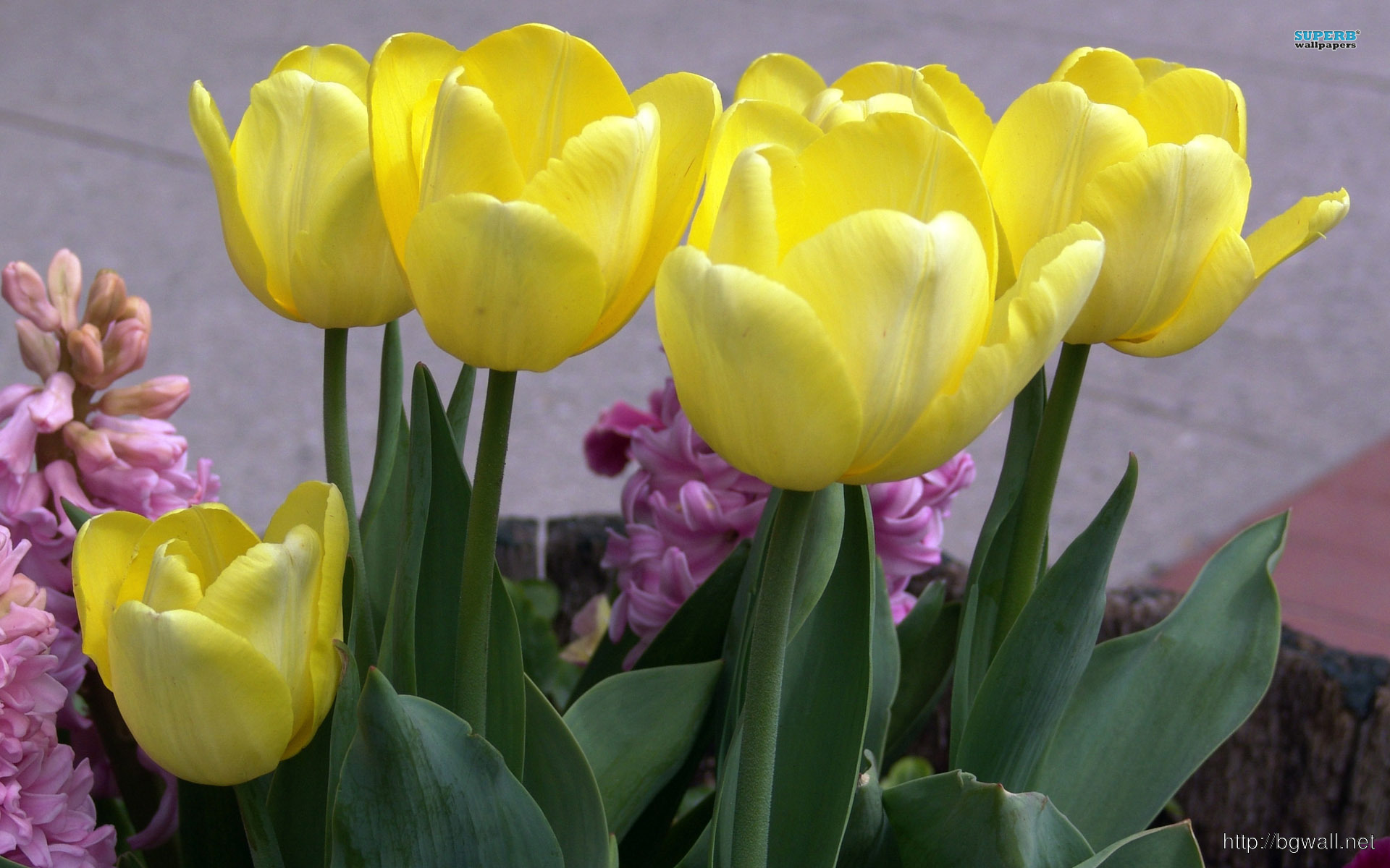 3d Yamaha Wallpaper Yellow Tulips Wallpaper Background Wallpaper Hd