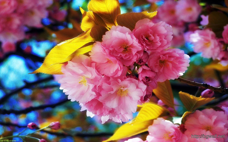 Summer Desktop Wallpaper Hd Cute Pink Flower Wallpaper Hd Background Wallpaper Hd