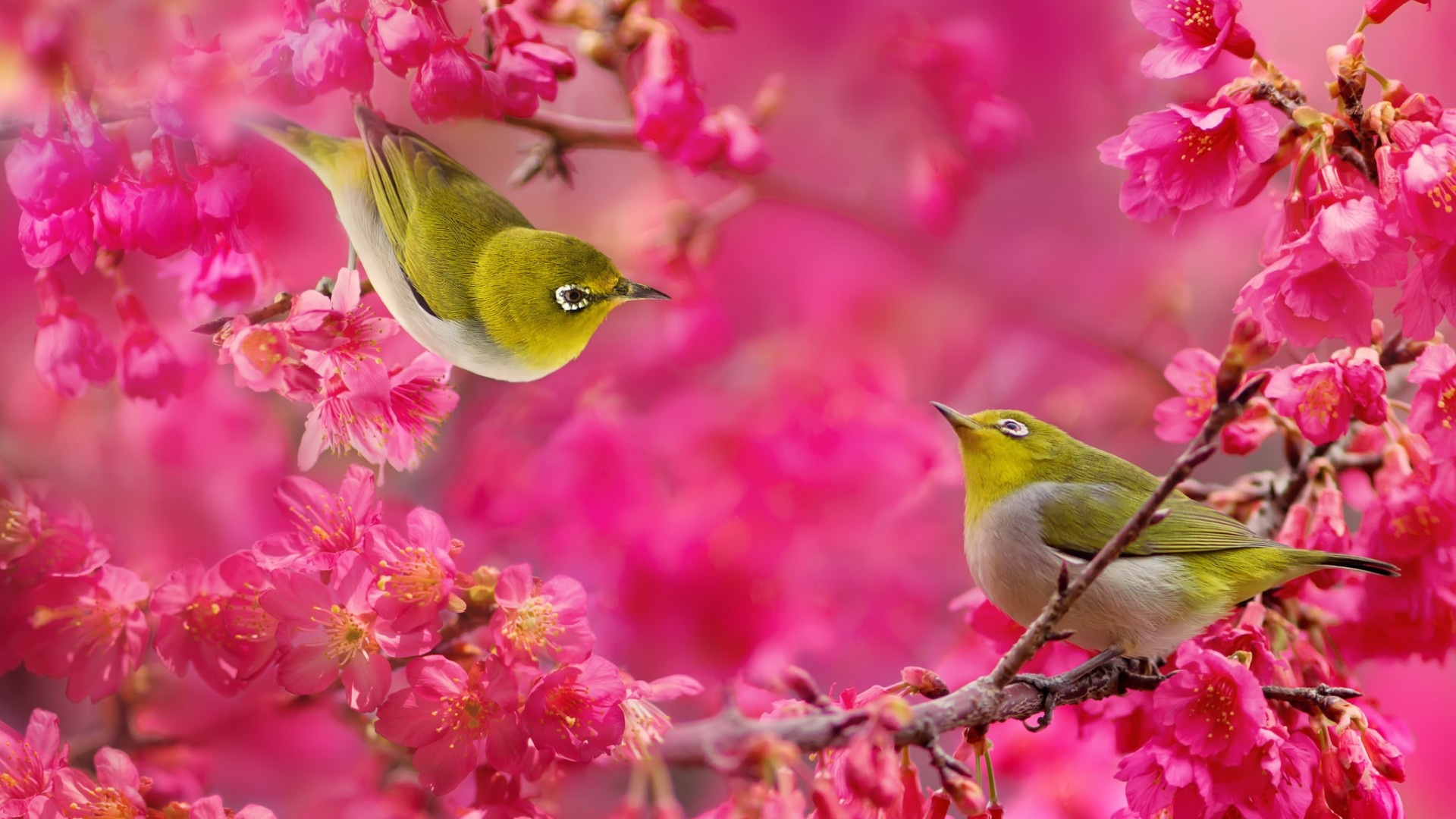 Beautiful Pictures Of Flowers And Butterflies Birds Japanese White Eye Bird Raspberry Flowers Wallpapers