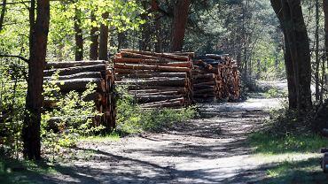 PiS wyprowadzi w pole leśników i NGO-sy? Ekspresowa autopoprawka posłów PiS do ustawy o lasach