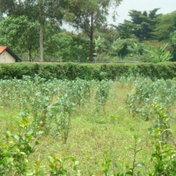3 Acres of prime land on red soil for sale in Kitisuru West