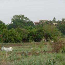 1/8 acre for sale in kajiado town