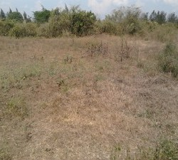 parcel of land in lolwe for sale