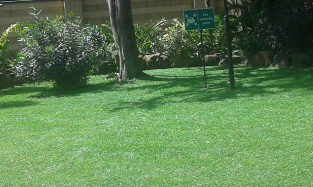 840350328_1_1000x700_zimbabwe-grass-westlands