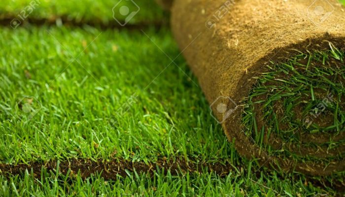 7022742-Green-turf-grass-roll-and-background-closeup-Stock-Photo-sod
