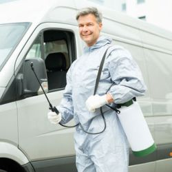 7-useful-tips-on-car-pest-control