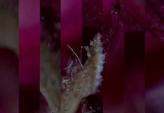 Magnified Plantae