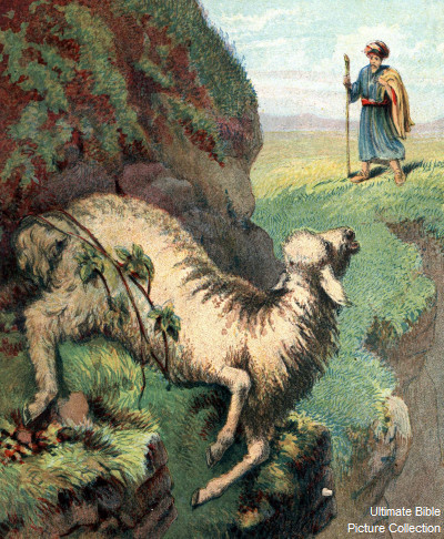 Ibrahim 3d Name Wallpaper Luke 15 Bible Pictures The Lost Sheep