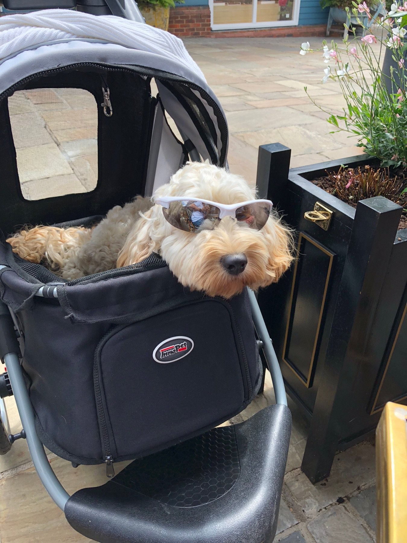 Oxford Pet Stroller Ebay Strollers For Shopping At Bicester Village With Your Pets