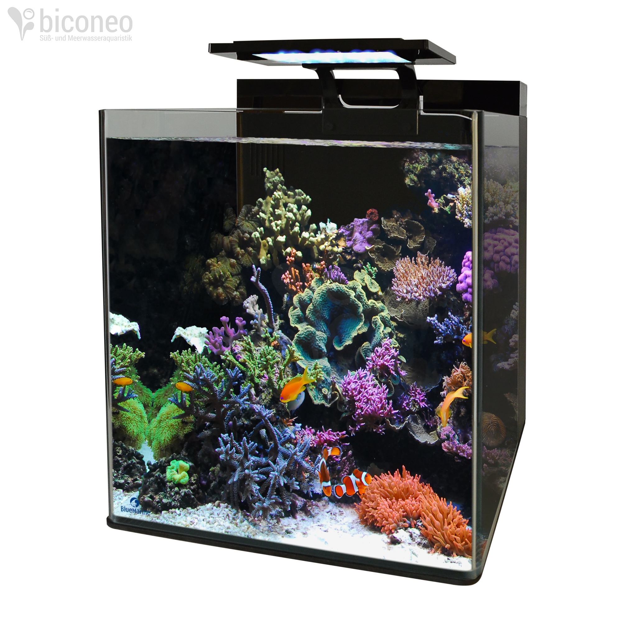 Nano Zee Aquarium Verlichting Blue Marine Reef 60