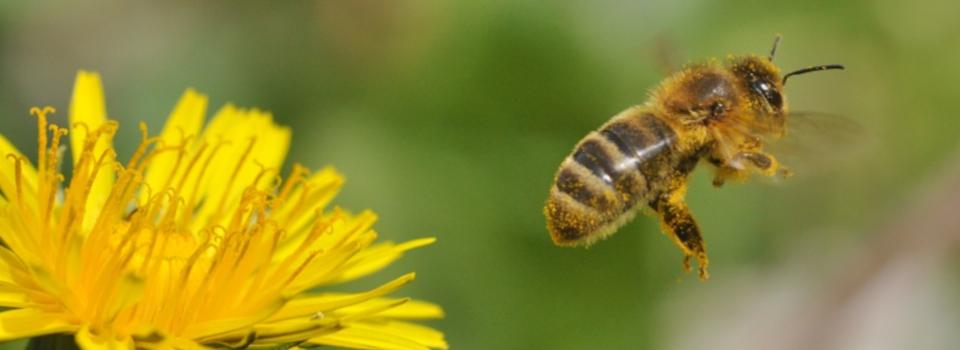 Bienenzuchtverein Lumdatal e.V.