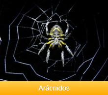 aracnidos-ok