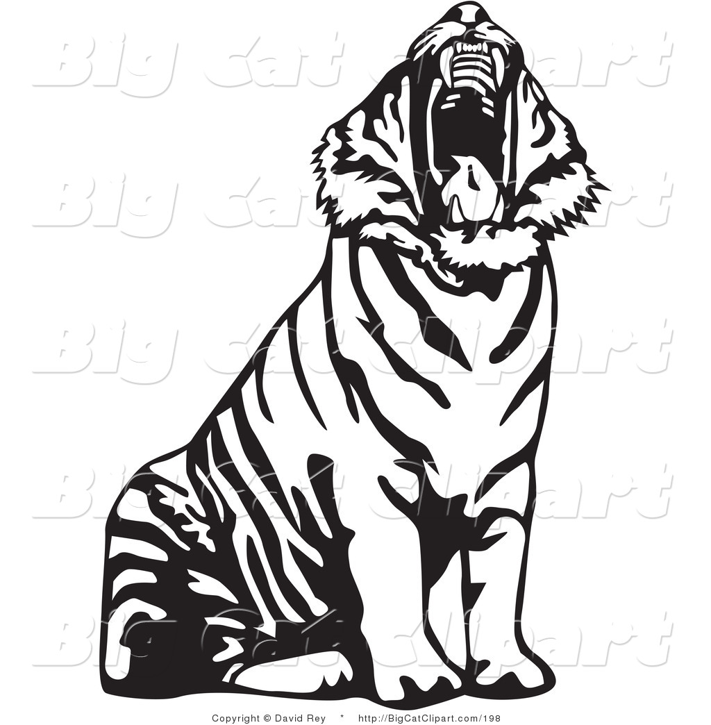Big Cat Vector Clipart Of A Yawning Black And White Tiger Roaring By David Rey 198