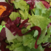 crunchy summer salad featured