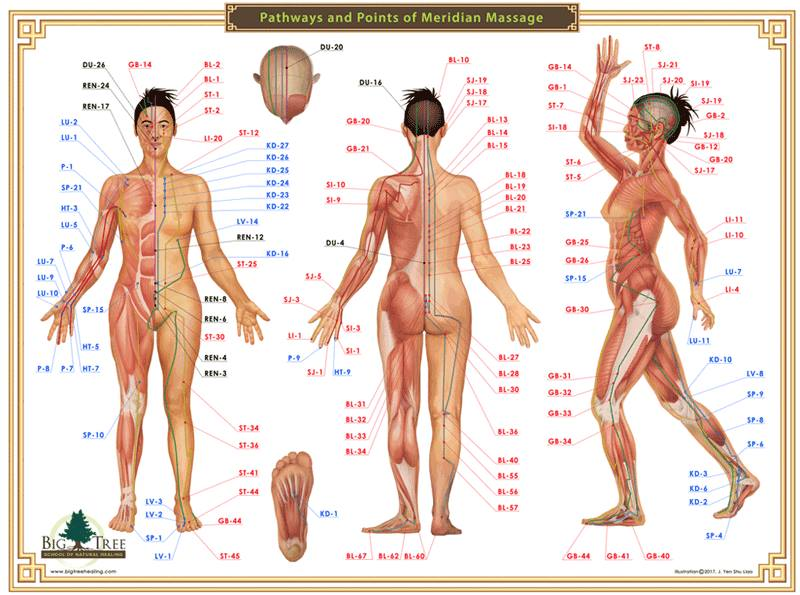 Acupressure Chart - Pathways and Points of Meridian Massage