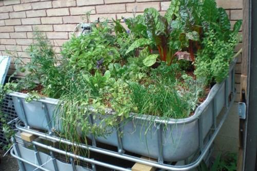 Medium Of In Home Garden System