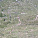 Bike Intelligencer Ride Classics: Mt. St. Helens' Juniper Ridge