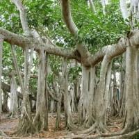 Flora i fauna Malediwów