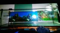600l aquarium - neu und gebraucht kaufen bei dhd24.com
