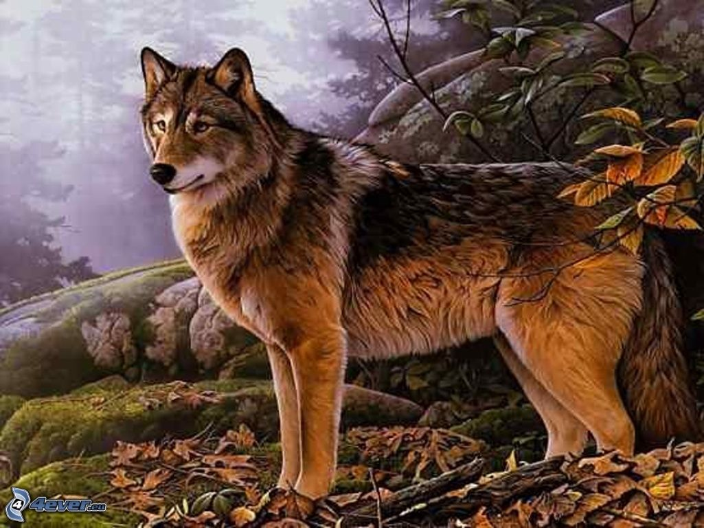 Hd Wallpapers Gezeichneter Wolf