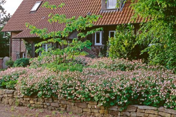 Garten Rasend schnell zum grünen Garten Gestalten mit - garten gestalten bilder