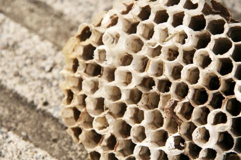 蜂の巣は食べることができる?食用料理があるの?栄養があり健康に良いって本当?