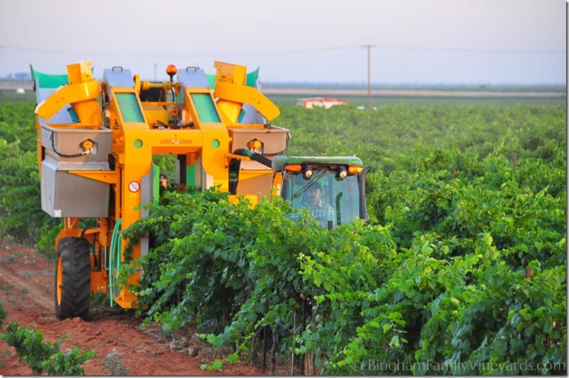 Another day of harvest…