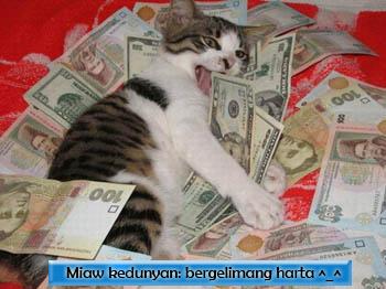 kucing bergelimang harta