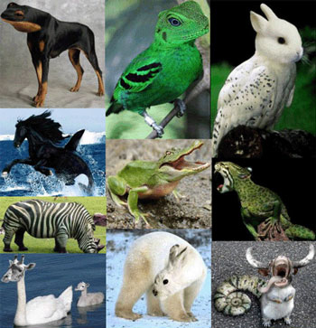 Kombinasi hewan yg menarik